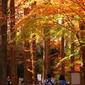 Photos: 秋色に染まる並木道を