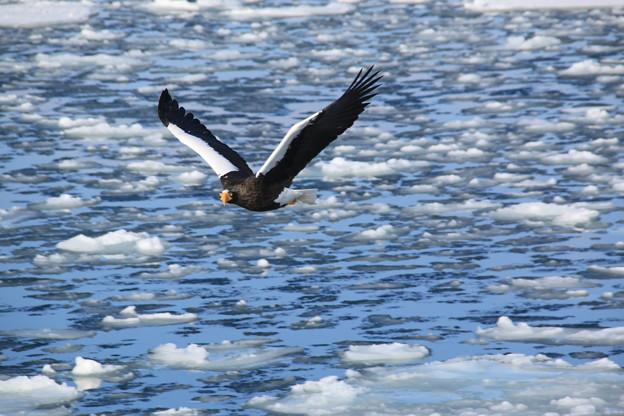 流氷の海を翔ぶ