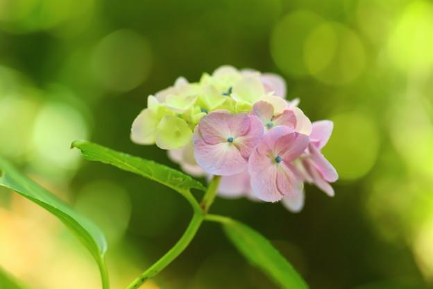 キラメキの中に咲く