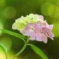 Photos: キラメキの中に咲く