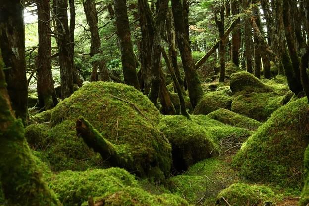 苔むす森の奥へ