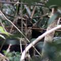 Photos: 藪の中で・・