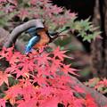 声高らかに往く秋を謳う
