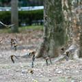 Photos: アトリが舞い飛ぶ