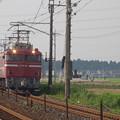 写真: EF81 81+E26系「カシオペア」 (2)