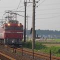 写真: EF81 81+E26系「カシオペア」 (3)
