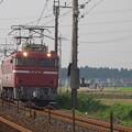 写真: EF81 81+E26系「カシオペア」 (4)