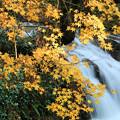 初冬の七ツ滝・六の瀑(2)
