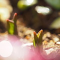 写真: 春隣