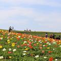 写真: 天空の花畑