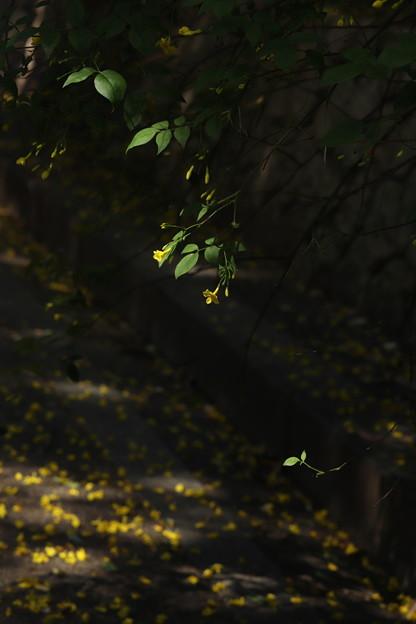 写真: 花 落ちる