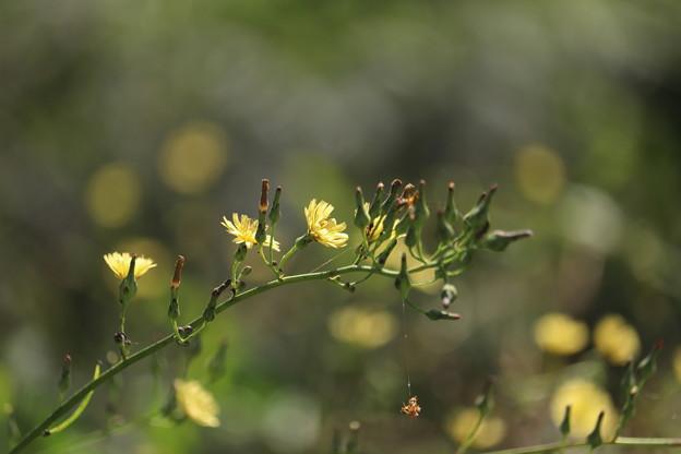 Photos: 秋のホタル