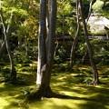 写真: 京・奥嵯峨から