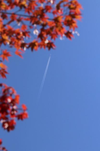 写真: 紅葉へ まっしぐら