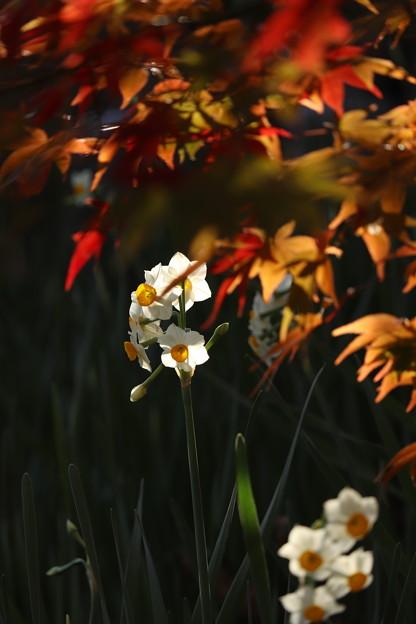 Photos: 季節 行き交う