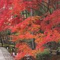 Photos: そうだ 京都へ行こう~っ