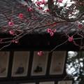 写真: 東風