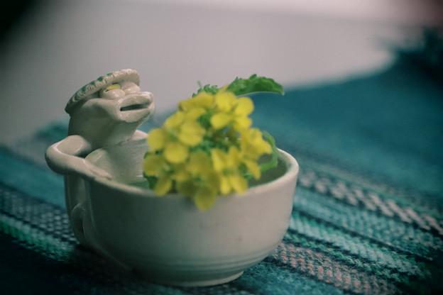 写真: ちょっと 春 ~第140回 モノコン~