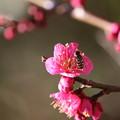 Photos: 春立ちぬ
