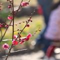 写真: 春の小径