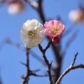 Photos: 一緒に春しよう