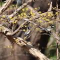 Photos: 懲りずに鳥撮り