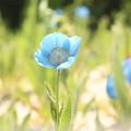 Photos: ヒマラヤの青