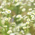 Photos: 花のように