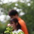 Photos: 恋するハーブ園