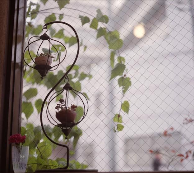 オートコード_観葉植物_0023