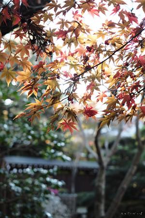 平林寺-3544_淡い紅葉