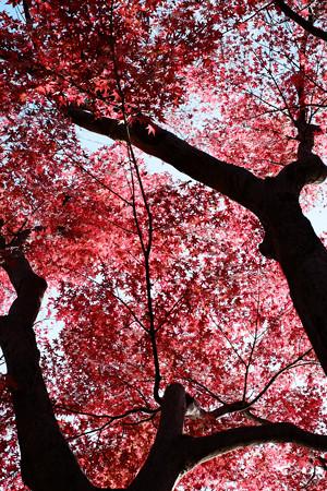 昭和記念公園-3755_真っ赤な空
