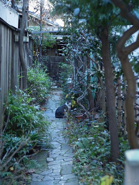 四谷散歩-0048009_猫