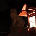 武蔵野神社_狛犬-5561