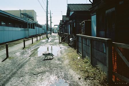 廃屋_ネコ-000023