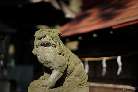 武蔵国分寺_本村八幡神社-01579