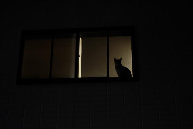 窓辺の猫-4156