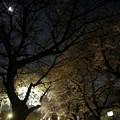 Photos: 夜桜-7462
