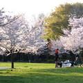 桜公園-7481