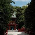 写真: 武蔵一宮氷川神社-7842