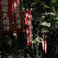 写真: 宝玉稲荷神社-7877