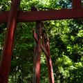 写真: 上之台稲荷神社-7906