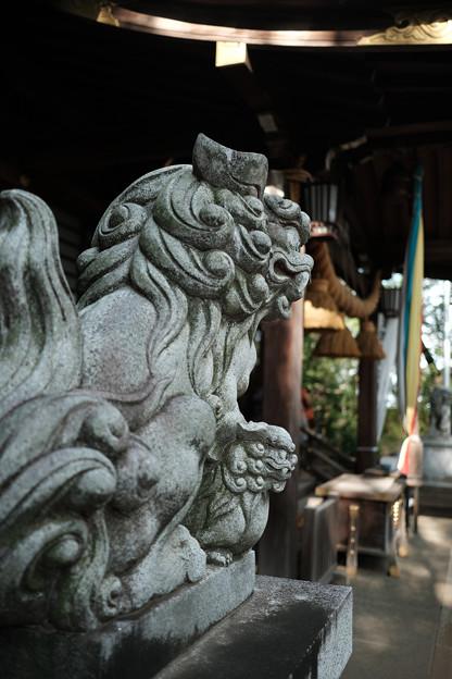 滝の城_05主郭_城山神社_狛犬-8218