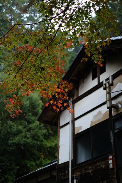 武田八幡宮_紅葉-8649
