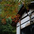 写真: 武田八幡宮_紅葉-8649