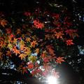 Photos: 小川寺_紅葉-4480