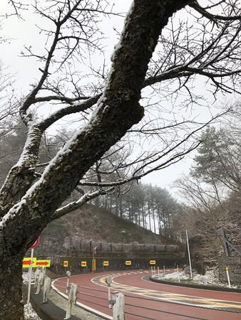 3月の雪!@奥多摩周遊道路