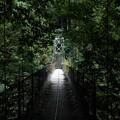 奥多摩むかしみち_つり橋-4948