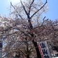 中華蕎麦とみ田 冨田治PRESENTS 最強ラーメン祭2019 in 小山