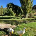 Photos: Gibston New Zealand